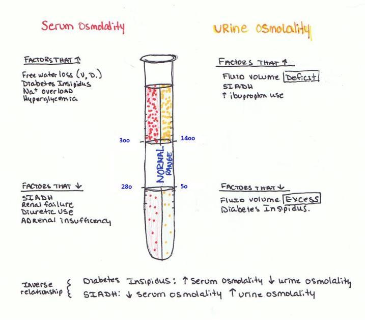 Osmolality (Large)